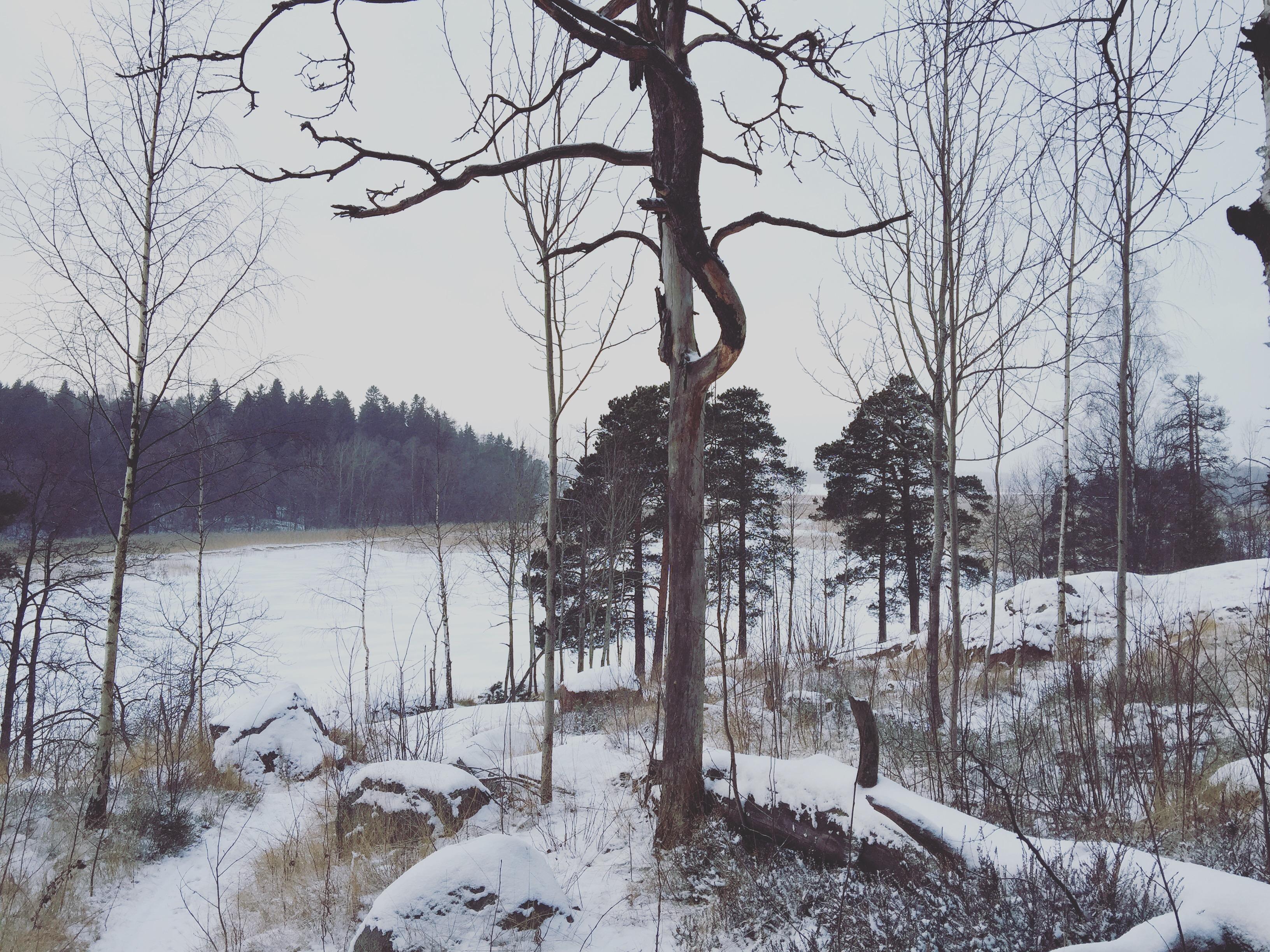 Kuva: Elina Vaara